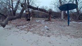 Un grande bello cane con i funzionamenti lunghi della razza di Malamut dei peli fra gli alberi e lungo la spiaggia del fiume stock footage