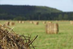 Un grande campo con i lotti delle pile del fieno alle preparazioni per l'inverno immagine stock
