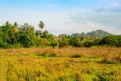 Un grande campo verde con una montagna nei precedenti fotografie stock libere da diritti