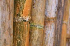 Un grande fondo di bambù immagini stock libere da diritti