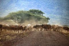 Un grande gregge delle mucche Immagini Stock Libere da Diritti