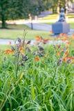 Un grande gruppo di passeri che riposano sui gigli di estate immagini stock