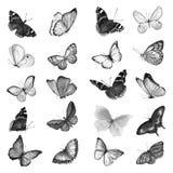 Un grande insieme delle farfalle dell'acquerello in bianco e nero Illust Fotografia Stock