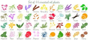 Un grande insieme di 44 piante ad oli esseziali stile piano, colorato Fotografia Stock Libera da Diritti