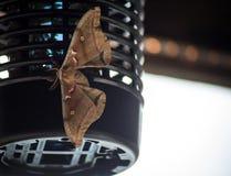 Un grande lepidottero atterra su attrezzatura immagine stock
