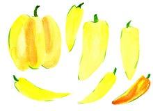 Un grande peperone verde dolce su un fondo bianco immagine stock