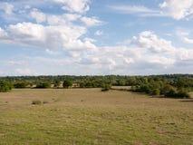Un grande pezzo aperto del paesaggio erboso della campagna con gli alberi in Fotografia Stock Libera da Diritti
