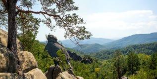 Un grande pino si sviluppa fra le rocce Fotografia Stock