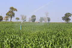 Un grande spruzzatore di agricoltura che bagna un campo di grano recentemente coltivare Fotografie Stock