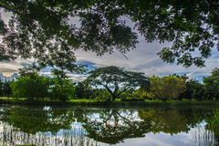 Un grande stagno e rami di albero coperti di erba invasa, animali di altre specie combinate Fotografia Stock
