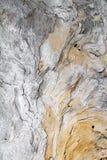Un grande tronco di legno scolpito dal mare ed a partire da tempo nasconde le forme immaginative nella struttura delle sue vene n fotografie stock