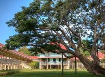 Un grande vecchio albero nel palazzo di Maruek Kathayawan Fotografie Stock Libere da Diritti