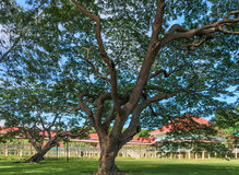 Un grande vecchio albero nel palazzo di Maruek Kathayawan Fotografie Stock
