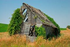 Un granero de decaimiento viejo que es consumido por naturaleza y plantas que suben Fotografía de archivo
