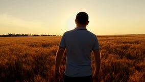 Un granjero acertado joven camina el campo del trigo contra el contexto de una puesta del sol en una cámara lenta r almacen de metraje de vídeo