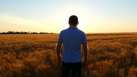 Un granjero anticipado joven camina el campo de trigo contra el contexto de una puesta del sol lentamente r almacen de video