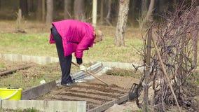 Un granjero de la mujer trabaja la tierra con una azada metrajes