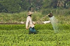 Un granjero es plantas de riego fotografía de archivo