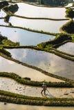 Un granjero que ara y angustioso los campos de arroz de arroz en las terrazas del arroz de Yuanyang fotos de archivo