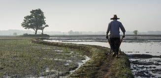 Un granjero que conduce una carretilla en estrecho desaparece en granja del arroz fotografía de archivo libre de regalías
