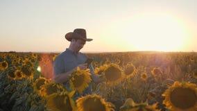 Un granjero se coloca en un campo de girasoles en la puesta del sol con un ordenador portátil El concepto de agricultura almacen de video