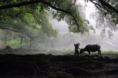 Un granjero y ganado Foto de archivo libre de regalías