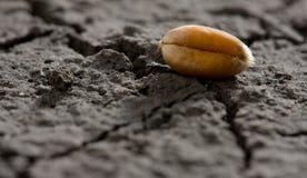 Un granulo su sbarco corroso Fotografie Stock Libere da Diritti