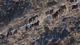 Un gregge dei cavalli Fotografie Stock