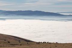 Un gregge dei cavalli che pascolano sopra una montagna, sopra un mare di immagini stock