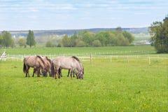 Un gregge dei cavalli nel pascolo Fotografia Stock