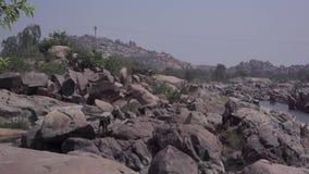 Un gregge delle capre vicino al fiume archivi video