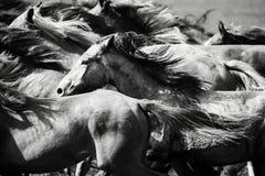 Un gregge di giovani cavalli Fotografia Stock Libera da Diritti