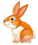 Un gros lapin Images libres de droits