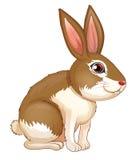 Un gros lapin brun illustration libre de droits