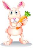 Un gros lapin tenant une carotte Photo stock