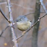 Un gros oiseau migrateur Photos stock