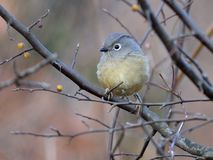Un gros oiseau migrateur Images libres de droits