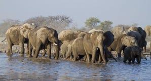 Un groupe d'éléphants au waterhole Images libres de droits