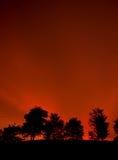 Un groupe d'arbre dans le coucher du soleil Image stock