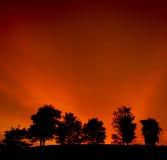 Un groupe d'arbre dans le coucher du soleil Photos libres de droits