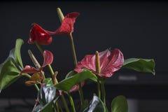 Un groupe d'orchidées de floraison photos libres de droits