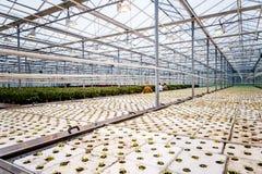 Un groupe de bébé plante l'élevage à l'intérieur de des pots à l'intérieur d'un greenh Photos stock
