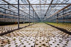 Un groupe de bébé plante l'élevage à l'intérieur de des pots à l'intérieur d'un greenh Image libre de droits