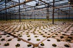 Un groupe de bébé plante l'élevage à l'intérieur de des pots à l'intérieur d'un greenh Photographie stock libre de droits