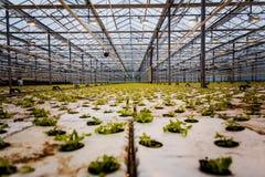 Un groupe de bébé plante l'élevage à l'intérieur de des pots à l'intérieur d'un greenh Photo libre de droits