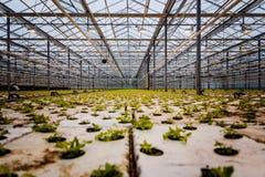 Un groupe de bébé plante l'élevage à l'intérieur de des pots à l'intérieur d'un greenh Images stock
