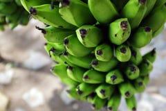 Un groupe de bananes vertes Photographie stock