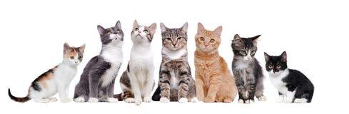 Un groupe de chats se reposant dans un cru Photographie stock