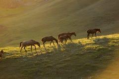 un groupe de cheval Images libres de droits