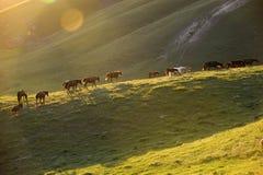 un groupe de cheval Photographie stock libre de droits